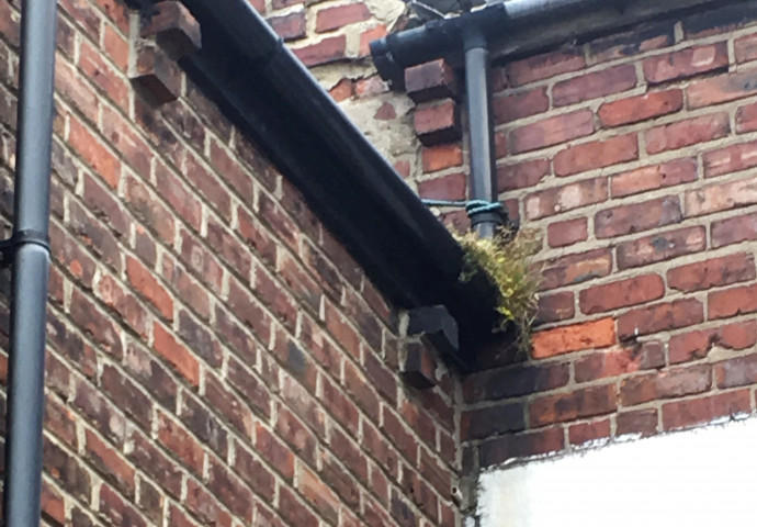 Gutters choked with vegetation